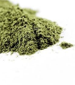 Skullcap Powder