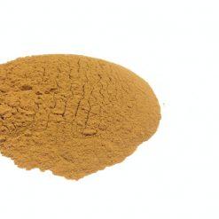 Incarvillea Sinensis 20x